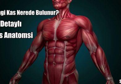 Kas Anatomisi